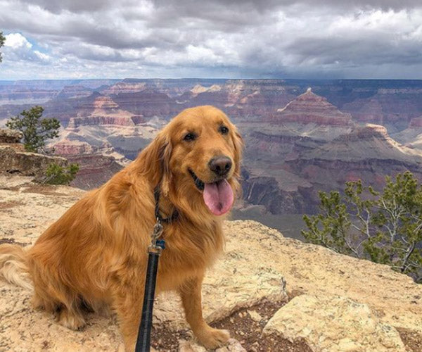 dog-friendly grand canyon national park