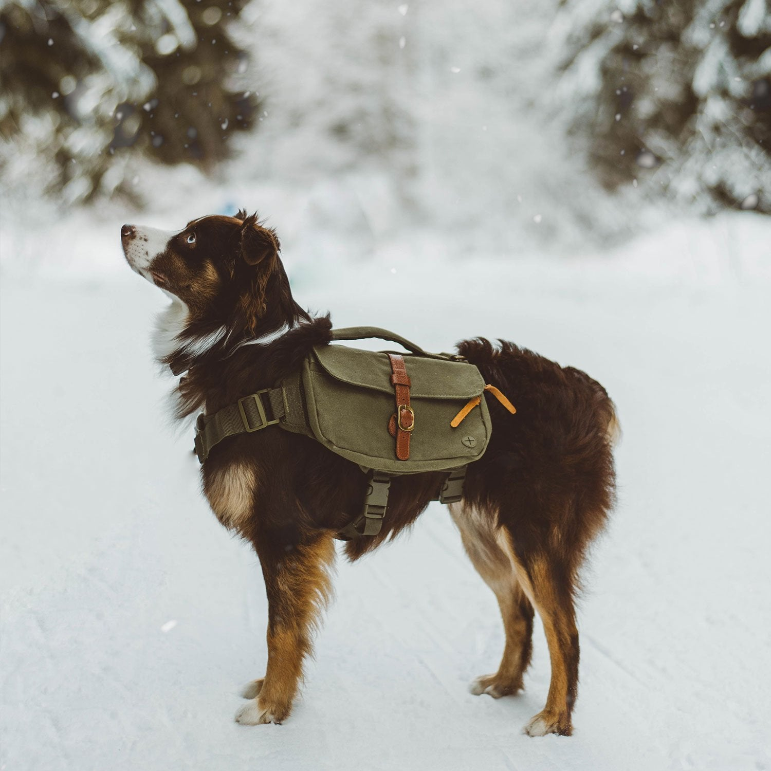 dog hiking in snow with backpack