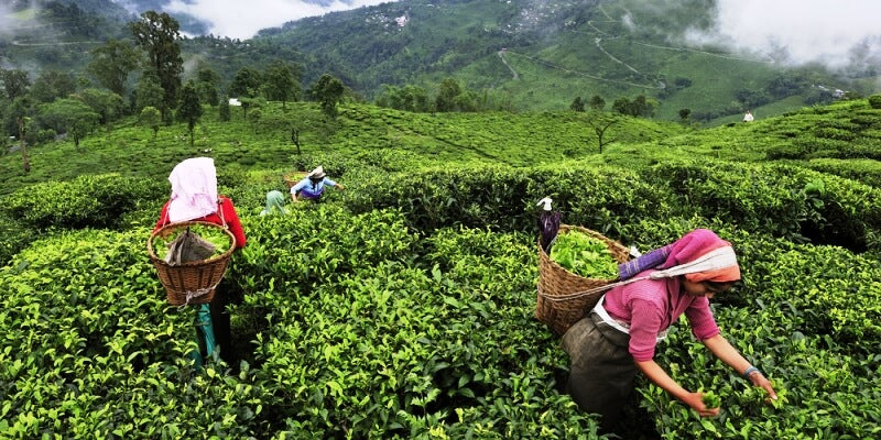 How the Global Pandemic affected the Indian Tea Industry