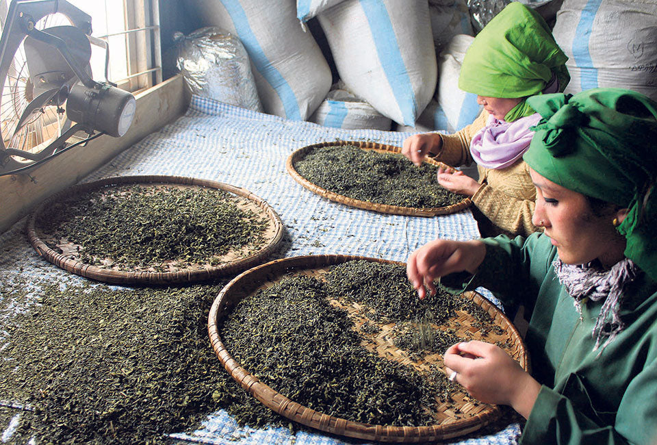 Nepal tea leaf processing no copyright infringement intended