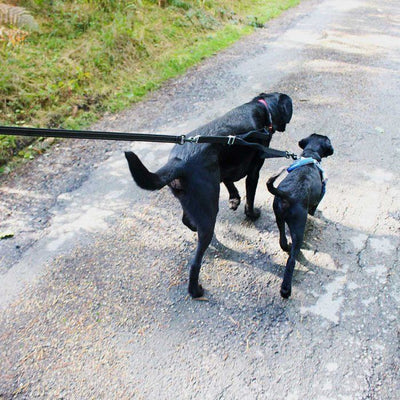 Mountain Paws Double Dog Lead Extension