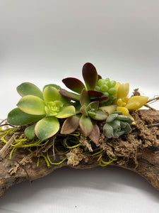 Workshop - Easter / Spring Succulent Driftwood Centerpieces