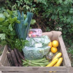Small Family Fruit and Veg box
