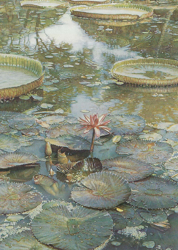 Steve Hanks - Waterlilies In Bloom Notecards