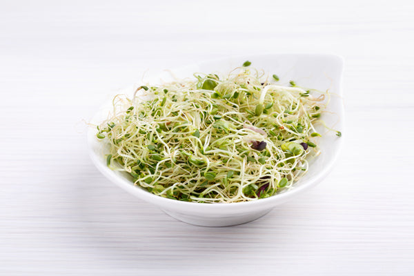 5 Tips on Growing Broccoli Sprouts