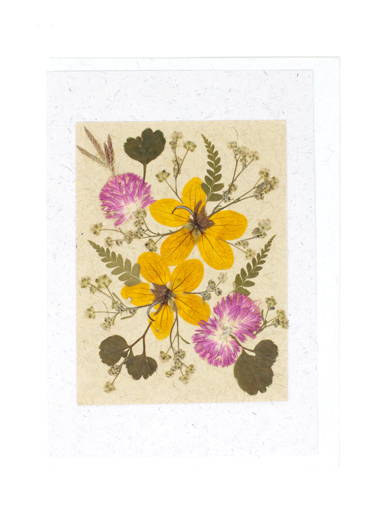 Daisy Burst Pressed Flower Card