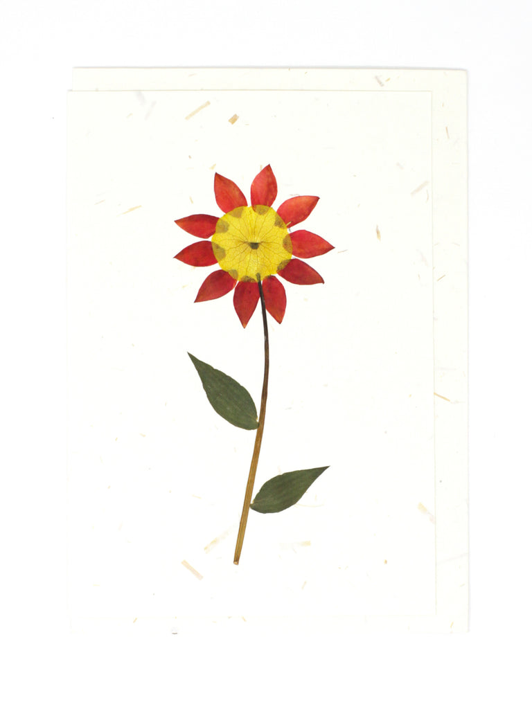 Daisy Pressed Flower Card