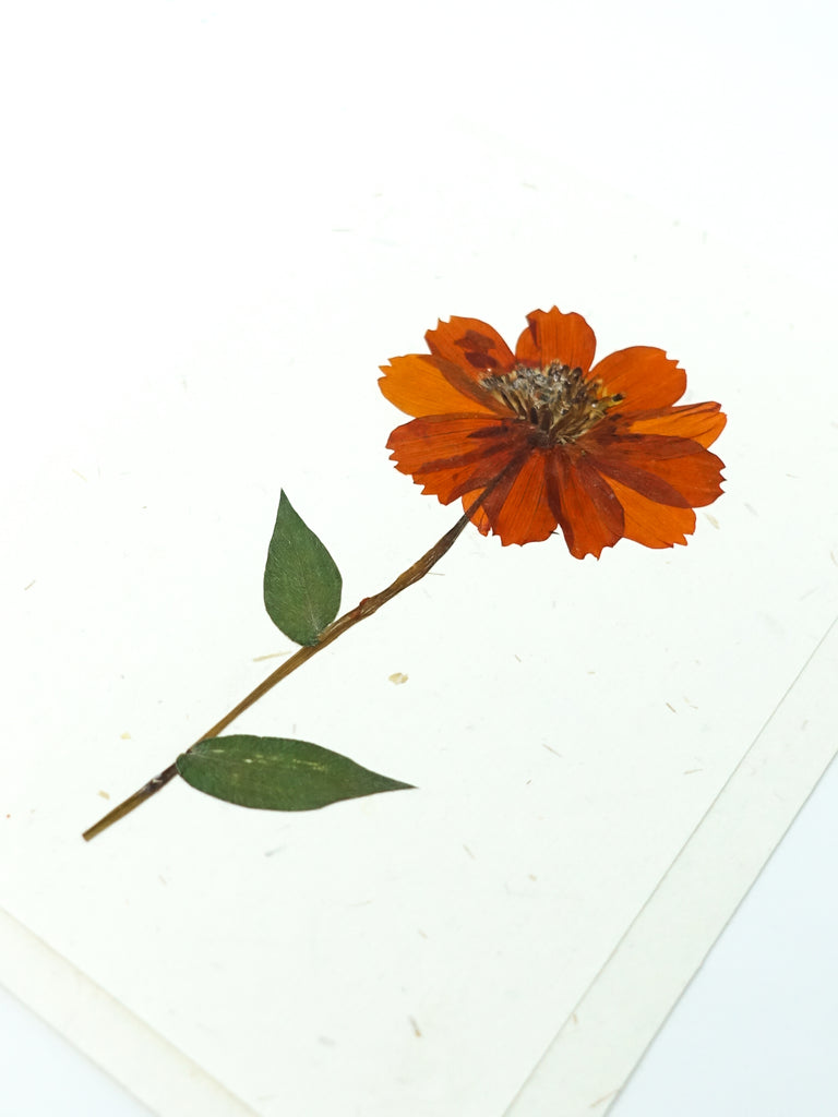 Marigold Pressed Flower Card