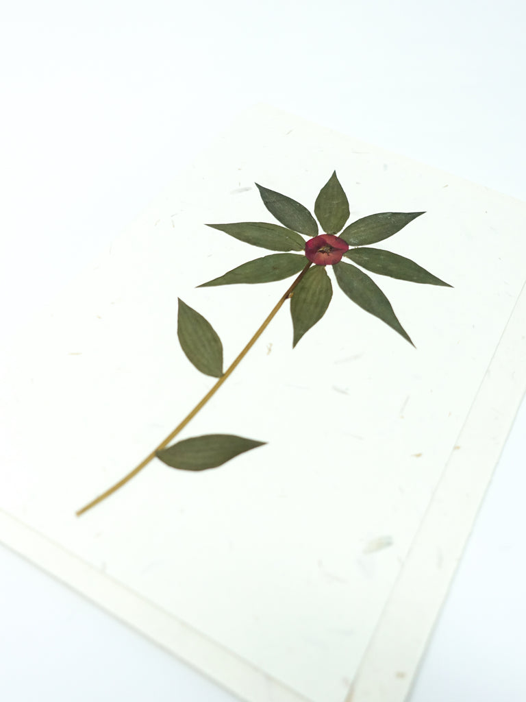 Aster Pressed Flower Card