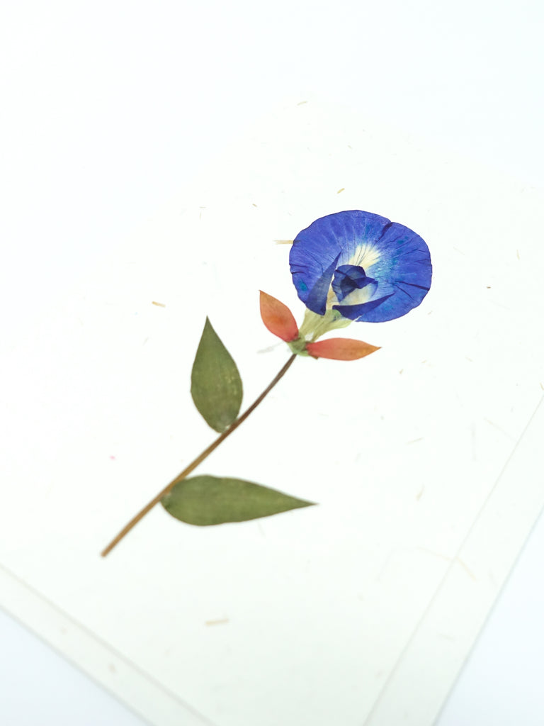 Periwinkle Pressed Flower Card