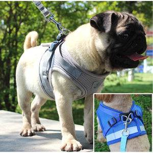 Reflective Harness with Leash