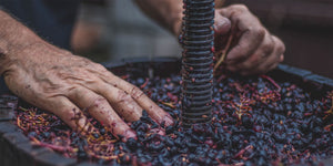 Want to Work in Wine? An Introduction to Nine Wine Careers