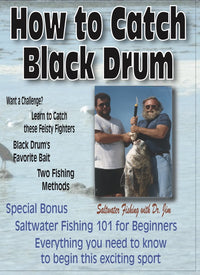 How To Catch Black Drum & Fishing 101 For Beginners
