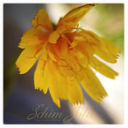 YELLOW SUMMERTIME - SchimJolie