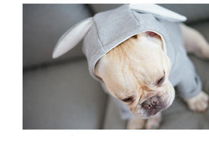 Rabbit Costume for Frenchie
