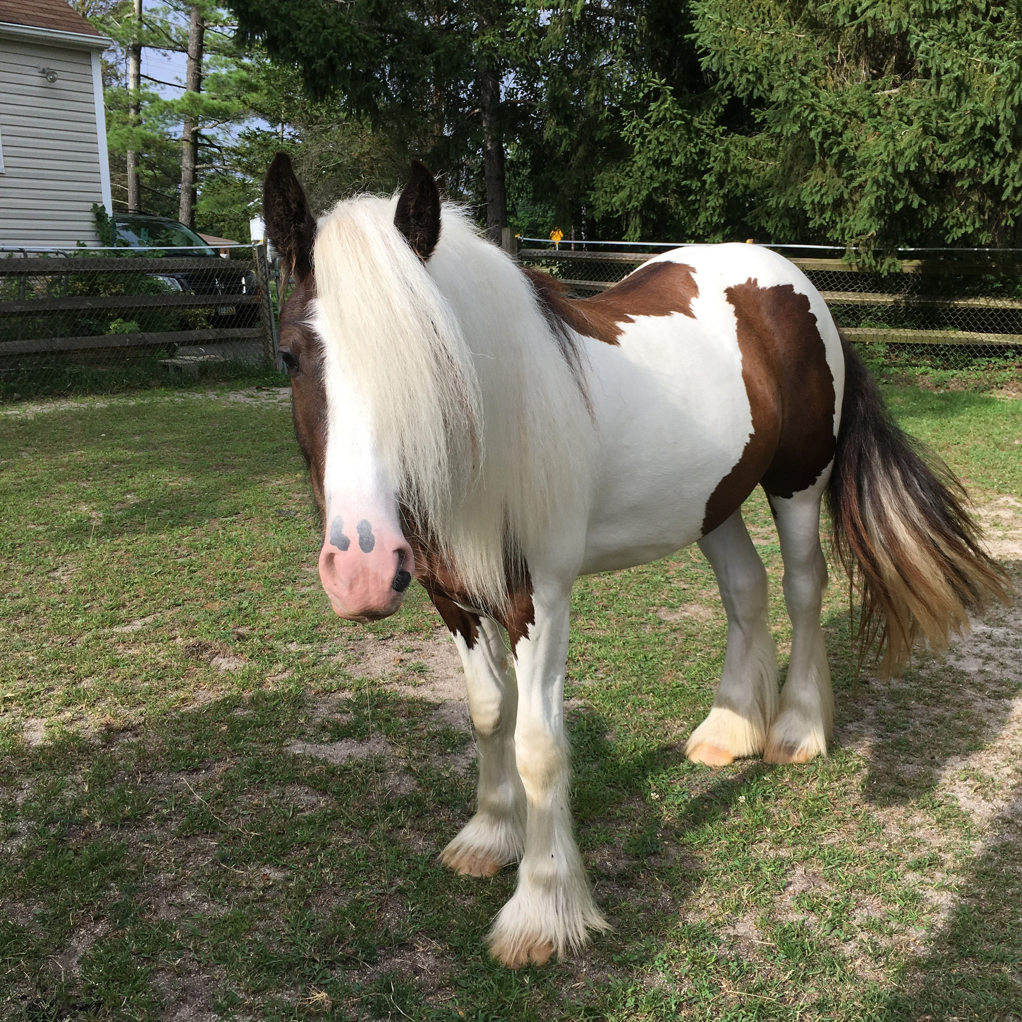 Hi! I'm Loki, the blogging horse! This is my journey!