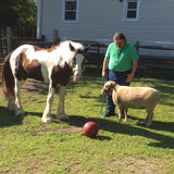 Steve with sheep and horse