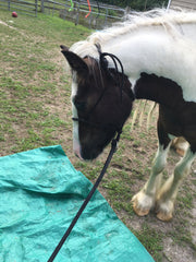 horse with tarp