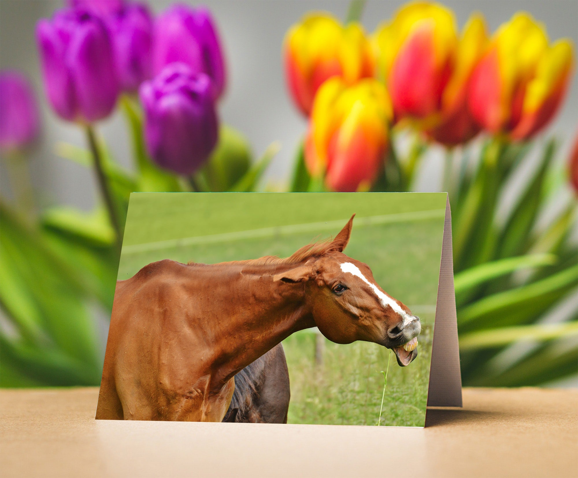 Funny Horse Card