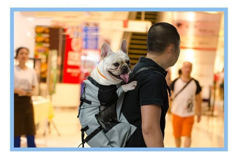 man using dog carrier backpack to carry puppy