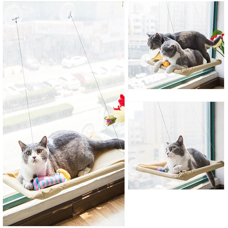 cats using shelves for windows