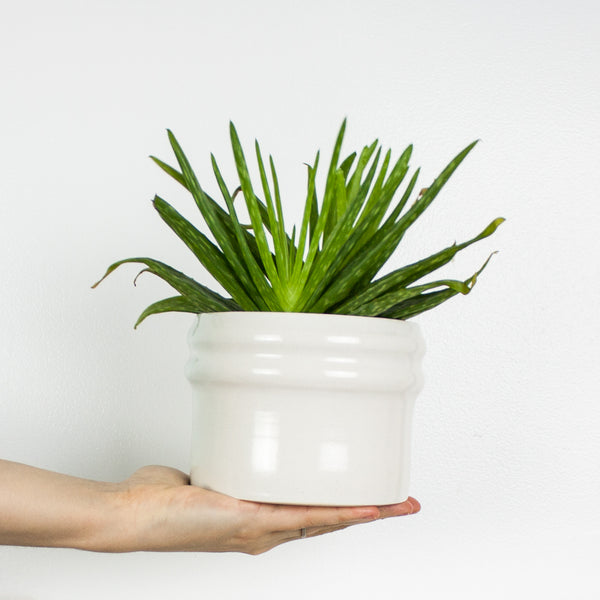 White Ripple Planter
