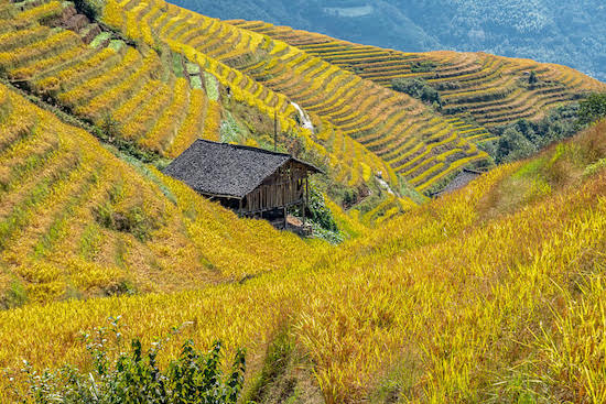 Longshen Rice Terrace