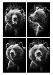 Bear in a Photo Booth