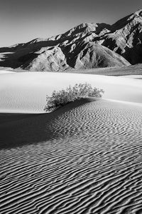 Death Valley II