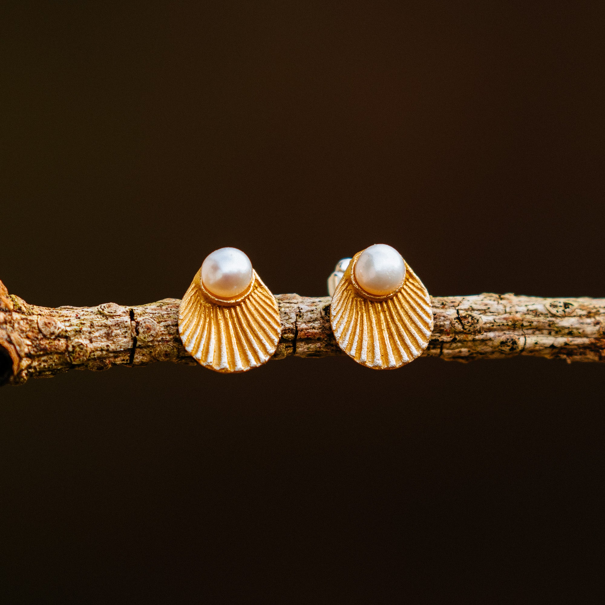 Sea Scallop Earrings