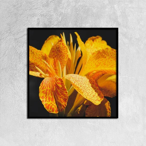 Printy6 Wall art 30cm×30cm Single Panel Canvas Print Wall Art - Orange Iris