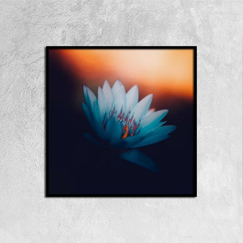 Printy6 Wall art 30cm×30cm Single Panel Canvas Print Wall Art - Water Lily