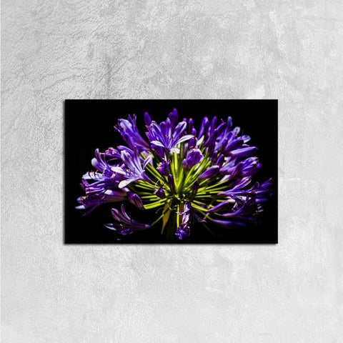 Printy6 Wall art 60cm×40cm Single Panel Canvas Print Wall Art - Allium