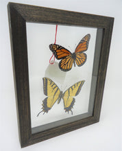 Monarch and Swallowtail Frame