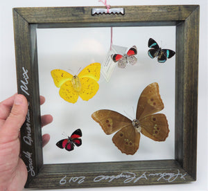 South American Butterfly Collage
