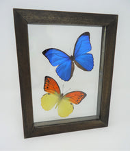 Morpho and Fire Orange Tip Frame