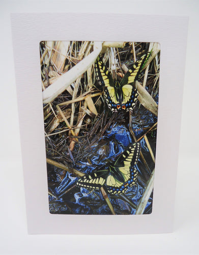 Anise Swallowtail Duo Greeting Card
