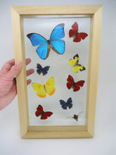 Butterfly Collage -- One of a kind