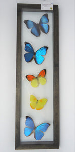 Morpho and Sulphur Collage Frame