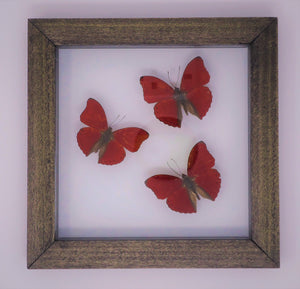 Blood Red Glider Trio Frame