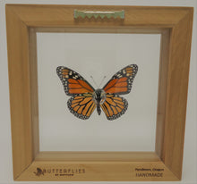 Monarch Butterfly Frame
