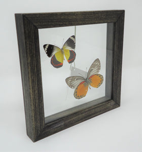 Painted Jezebel Duo Frame