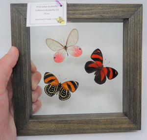 South American Butterfly Trio Frame