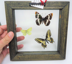 Columbia Basin Butterfly Trio Frame