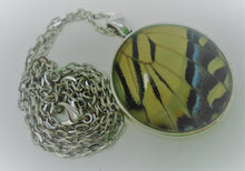 Two-Tailed Swallowtail Pendant Necklace -- HINDWING
