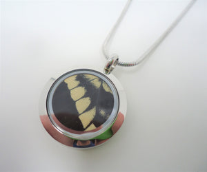 Pale Swallowtail Locket