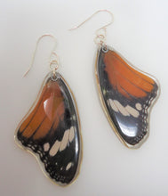African Queen Butterfly Resin Earrings