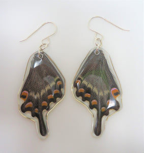 Alpine Black Swallowtail Resin Earrings