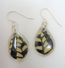 Anise Swallowtail Resin Earrings -- Papilio zelicaon