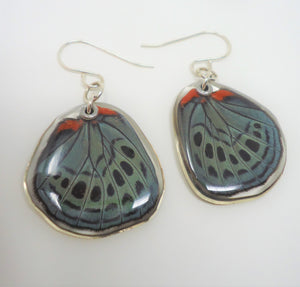 Leprieur's Glory Butterfly Resin Earrings -- Asterope leprieuri